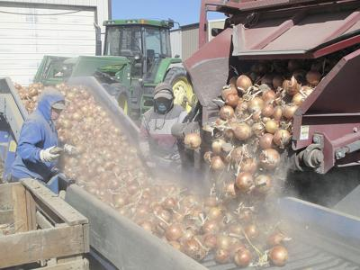 Onion reload facility on track, backers say