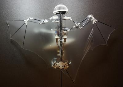 Newest drone flies like a bat