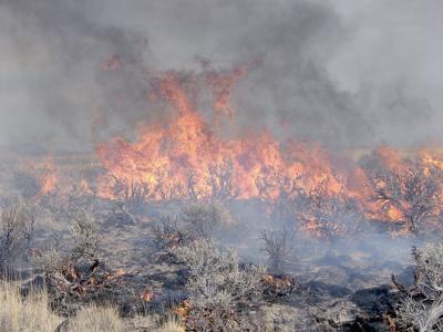 Feds new strategy to save sagebrush habitat