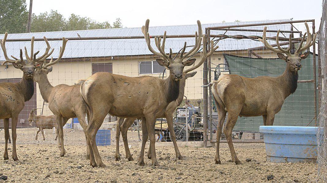 Elk ranch dream continues to evolve