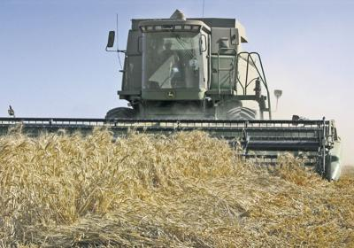 Wheat prices may suffer
