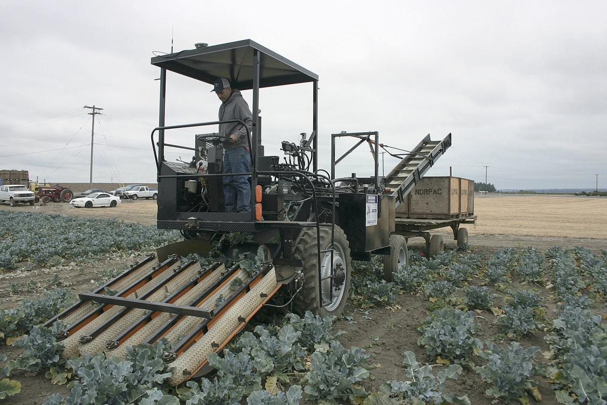 Harvester boosts broccoli