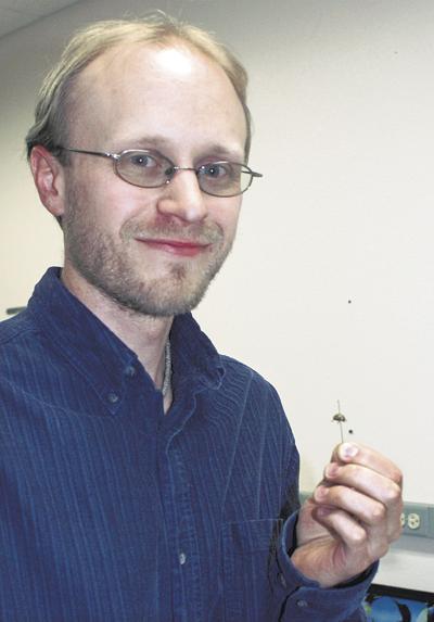 Research targets potato beetle