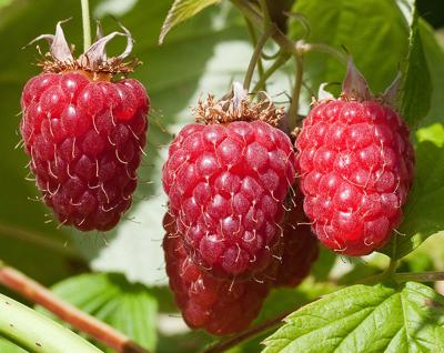 dj raspberry investigation