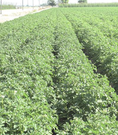 Idaho ag department awards $1.9 million to 15 specialty crop projects