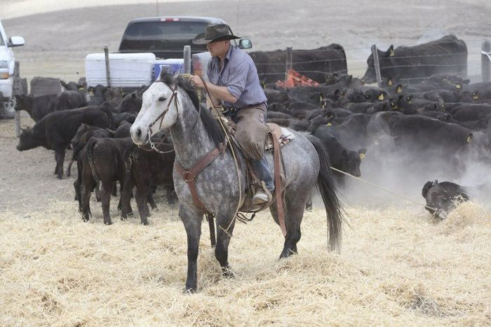 Holy Cow ranch aims to feed local poor