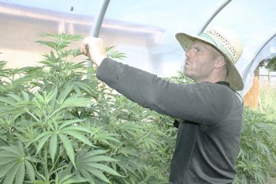 The marijuana farmer next door
