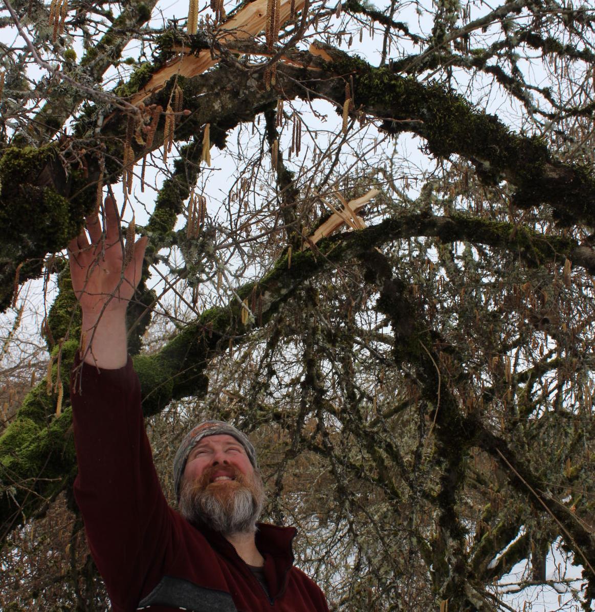 'Massive damage' to hazelnut trees