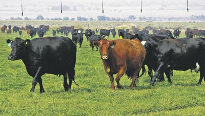 Cattlemen build annual convention around preserving industry, lifestyle