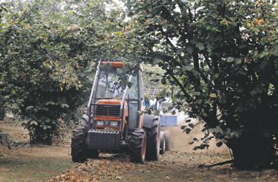 110,000 pounds of hazelnuts recalled