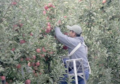 Pacific Northwest tree fruit industry likes USMCA