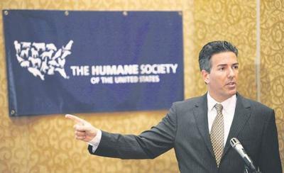 Animal agriculture organizations mum on HSUS sex scandal