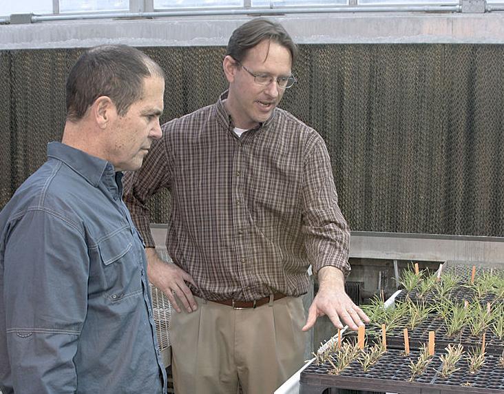 Herbicide resistance 6