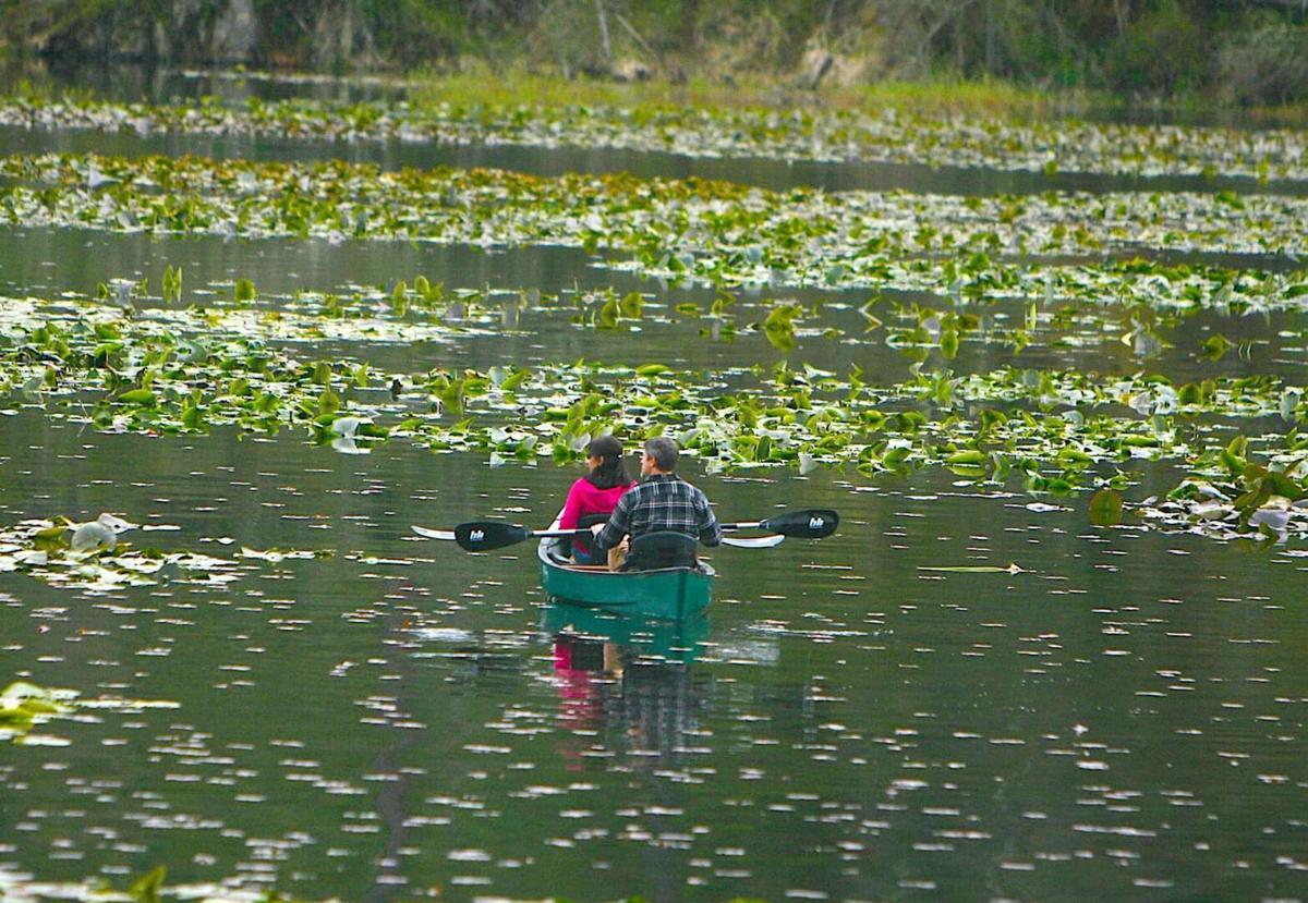 BWalker Kootenai Water 1.jpg