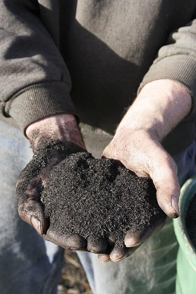 Researcher examines biochar use in forests