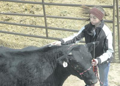 Spring fair gives 4-H'ers practice for summer events