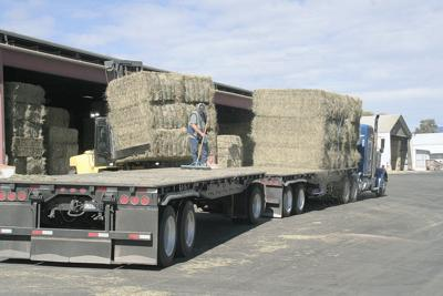Hay exporters worried about China