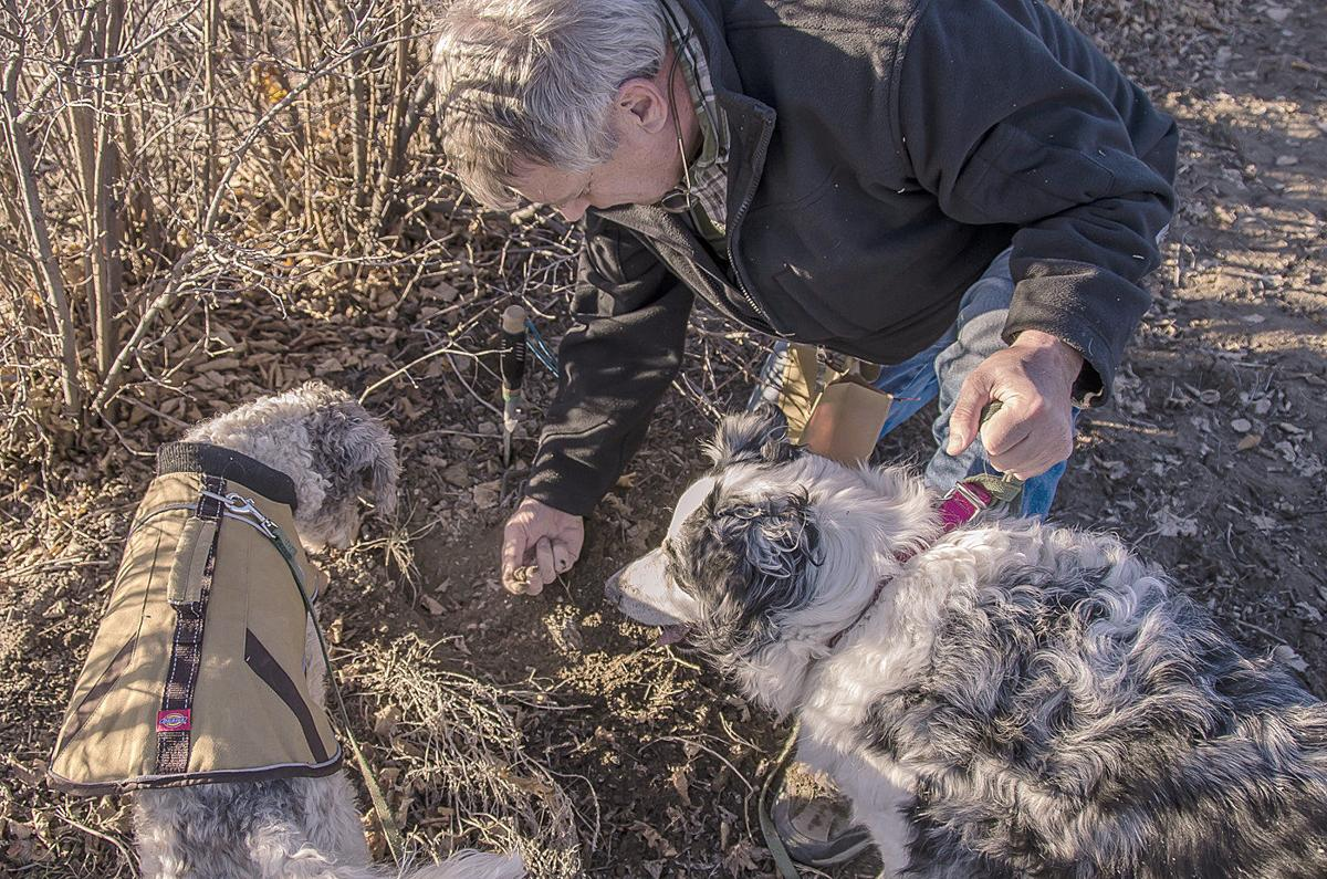 Idaho farmers try to unlock secret of producing truffles