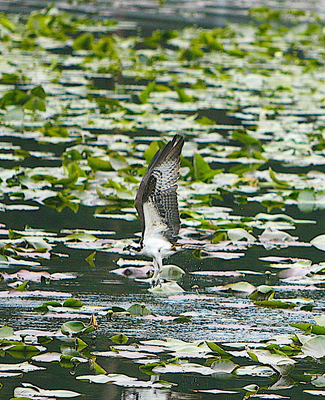 BWalker Kootenai Water 2.jpg