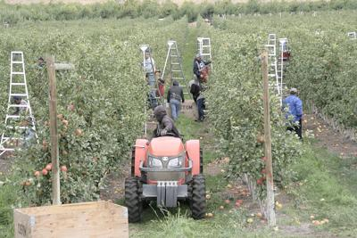 Fees proposed for Washington farmers who hire foreign workers