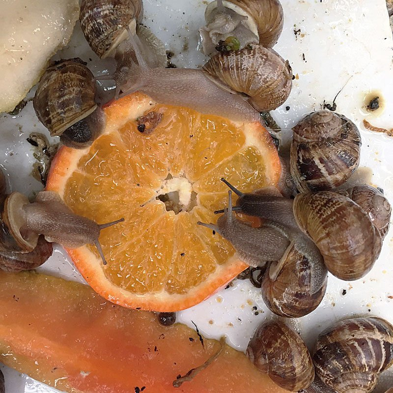 Business is slow at snail farm