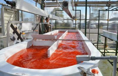 Japan-U.S. joint venture grows algae with use of CO2 from waste unit