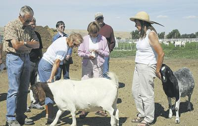 Goats for meat are Simon Boers' specialty