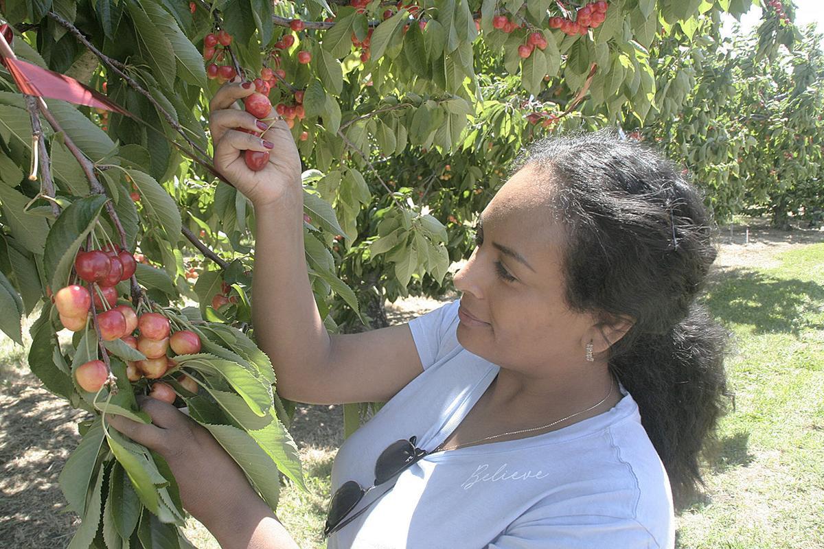 Urban cherries 3