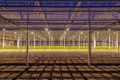 Let there be light: The rise of high-tech farming and the light revolution
