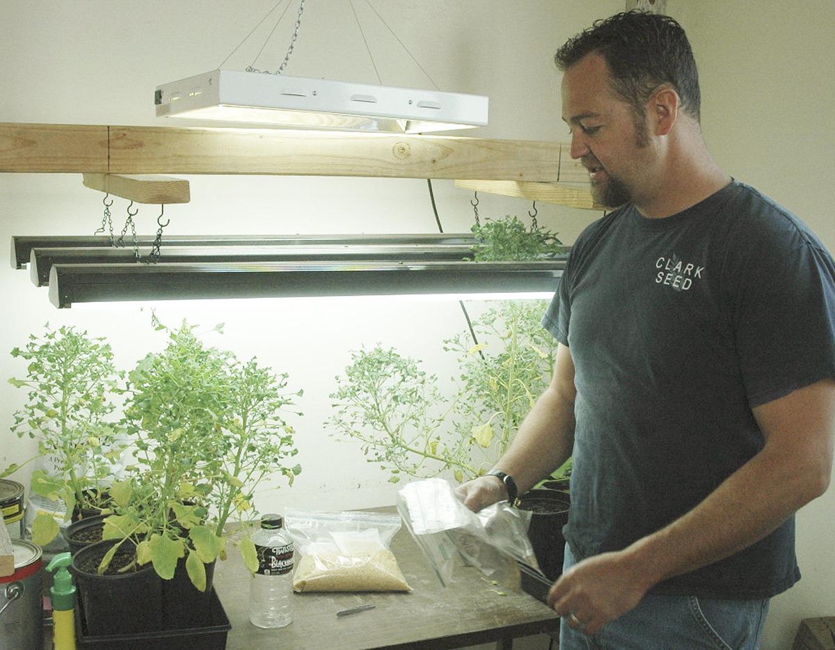 Eastern Idaho expanding quinoa production
