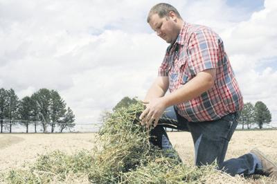 Columbia Basin battles first-cutting rain