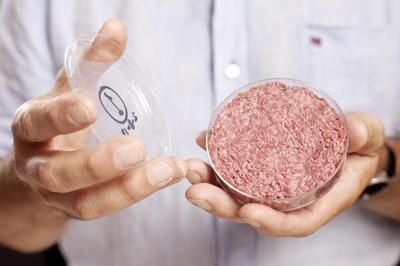 Harvard weighs in on labeling lab meat