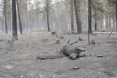 Washington unions say no to rangeland protection associations