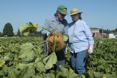 Pumpkin patch celebrates 50 years