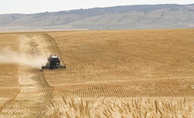 Wheat co-op says this year second-best in its history