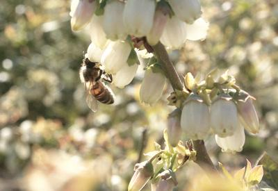 USDA: Pollinator forage stable, but quality declined in key areas