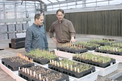 Herbicide resistance 7