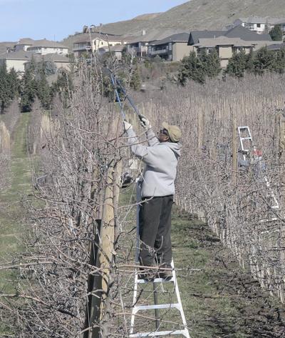 Pruning farmworkers
