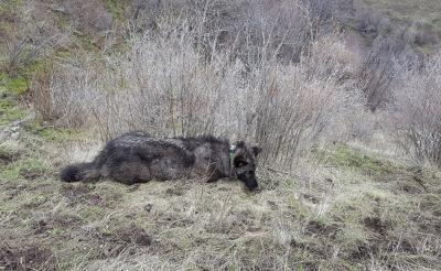 Illegal poaching case