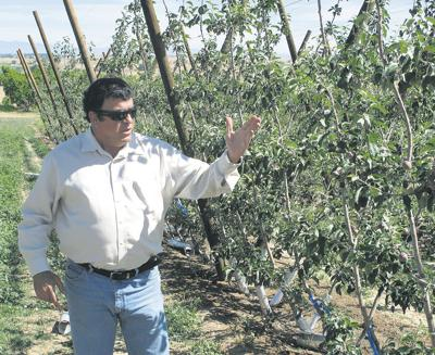 Idaho fruit field day to explore mechanization of orchards