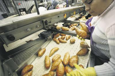 Europeans dig sweet potatoes