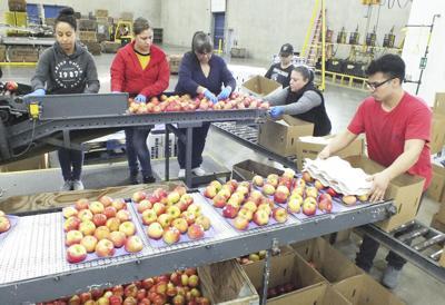 Washington Fruit cultivates reputation as trend-setter