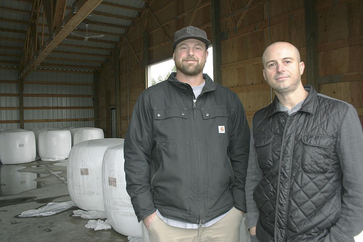 Western Innovator: Growing hemp to scale   Oregon