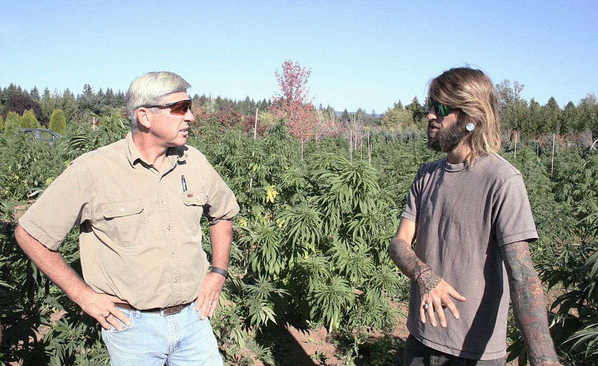 Nursery Grower Ventures Into Hemp Oregon Capitalpress