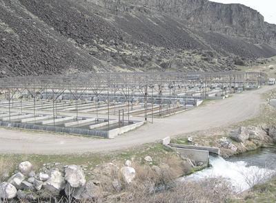 College of Southern Idaho mulls trout farm purchase from state