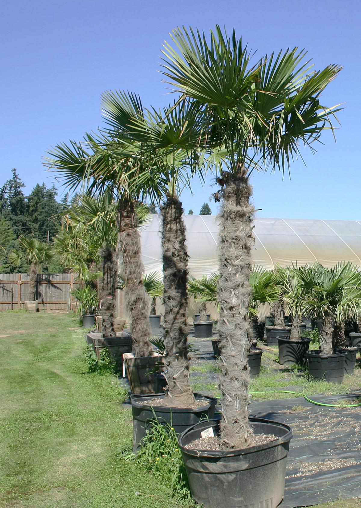 Nursery grows from interest in palms