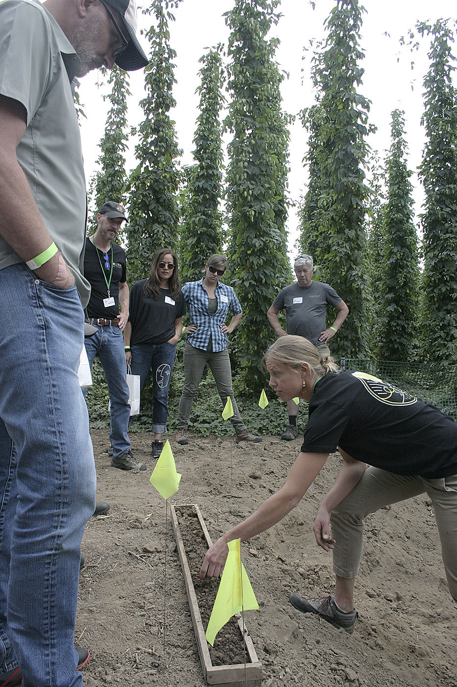 Hops terroir 3
