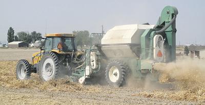 Idaho bean industry mulls funding bean breeder position