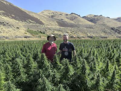 HEMP APPEAL: Newly legal crop attracts new generation of farmers