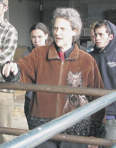Grandin devises better measurements